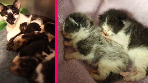 Kittens need help recovering after being in overheated kennels.