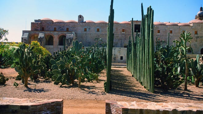 The Oaxaca Etnobotanical Garden in its early years when the fence post cactus were precisely planted for photography.
