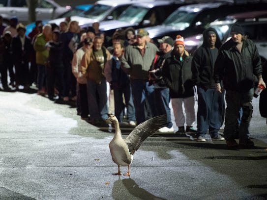 A goose stands with a group of Empty Stocking fund