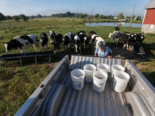 Fred Zell's beef cattle line up behind him as he gets ready to feed them at his family's century farm in Billings.