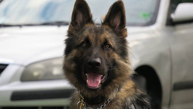 Collier County Sheriff's Office K9 Ajax