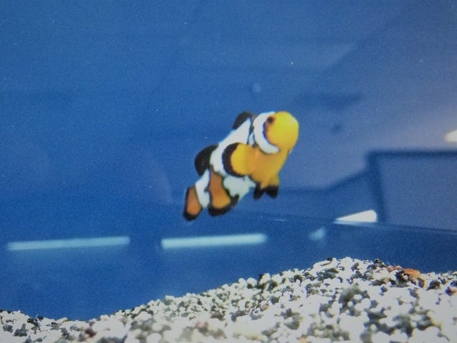 Underwater discoveries await at new exotic fish store