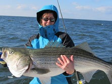 Chesapeake Bay's rockfish: Will catching more of them help the species rebound?