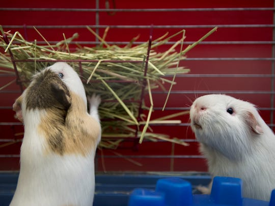 Southeast Bunfest at the Kane Center in Stuart June 2 attracts rabbit and guinea pig owners from all over the southeast and is a great opportunity to learn about these awesome animals, and maybe even save a life by taking an adoptable critter home.