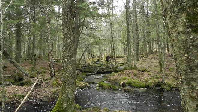 Twentymile Creek in the Chequamegon-Nicolet National Forest.