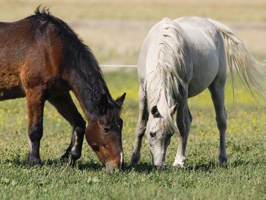 Montana Horse Sanctuary 3