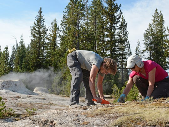 CDT Montana volunteers Barbara Fortunate and her sister, Patty Bartholomew, plant moss to cover off-trail paths in the Shoshone Geyser Basin of Yellowstone National Park on Aug. 29.