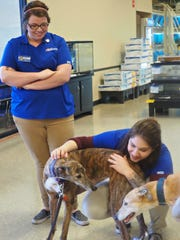 Petsmart employees show some live to Heart Bound Greyhound