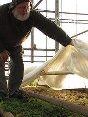 David Miskell tends to his greenhouse-covered growing