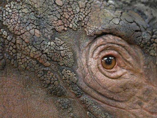 635506935297968902-rhino-eye