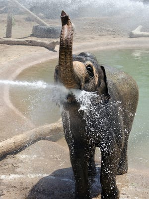 The Phoenix Zoo will have a day of appreciation for Reba and the rest of the elephants on Sunday, Sept. 27.