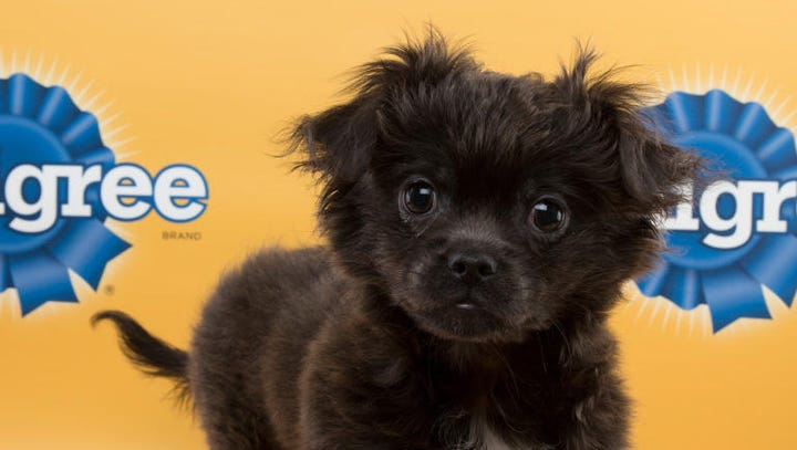 Asheville Humane Society dogs in Puppy Bowl XI lineup