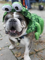 Mo the bullfrog shows off his costume during the 11th annual Mainstrasse Pawrade.