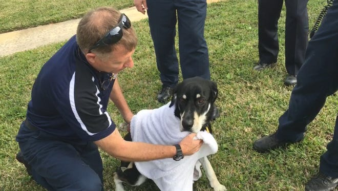 Firefighters in Satellite Beach pulled a lost dog from a canal Saturday. His owners retrieved him shortly after the rescue.