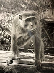 A monkey from the Tropical Wonderland theme park. The