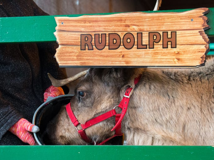 All nine of Santa's reindeer can be seen at Hersheypark.