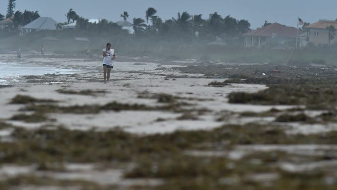 """Marie Winter, of Steamboat Springs, Colorado, walks the seaweed-covered beach off South Beach on Monday, Nov. 13, 2017, in Vero Beach while visiting family with her husband. """"I love it because it changes every day that I'm here. That's the power of nature; that's why I love it,"""" Winter said about the weather. Rough surf and rip current advisories at the beach were in effect through the afternoon Monday from Volusia County south through Martin County. """"Every single day you wake up here, the beach is completely different, every day, and I love that about it."""" Winter said."""