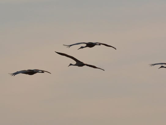 The annual Midwest Crane Count took place last weekend.