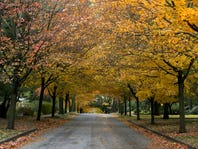Autumn leaves line 45th street off Kingman boulevard on Beggars' Night, Wednesday, Oct. 30, 2013, in Des Moines, Iowa.
