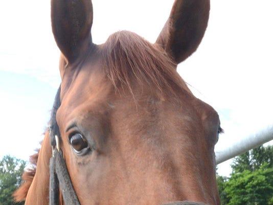 DFP 0627_horse_pix