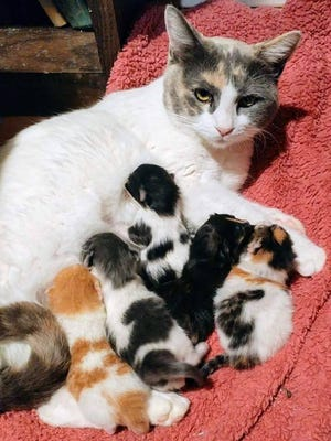 Kittens are born and dropped off at Saving One Life shelter.