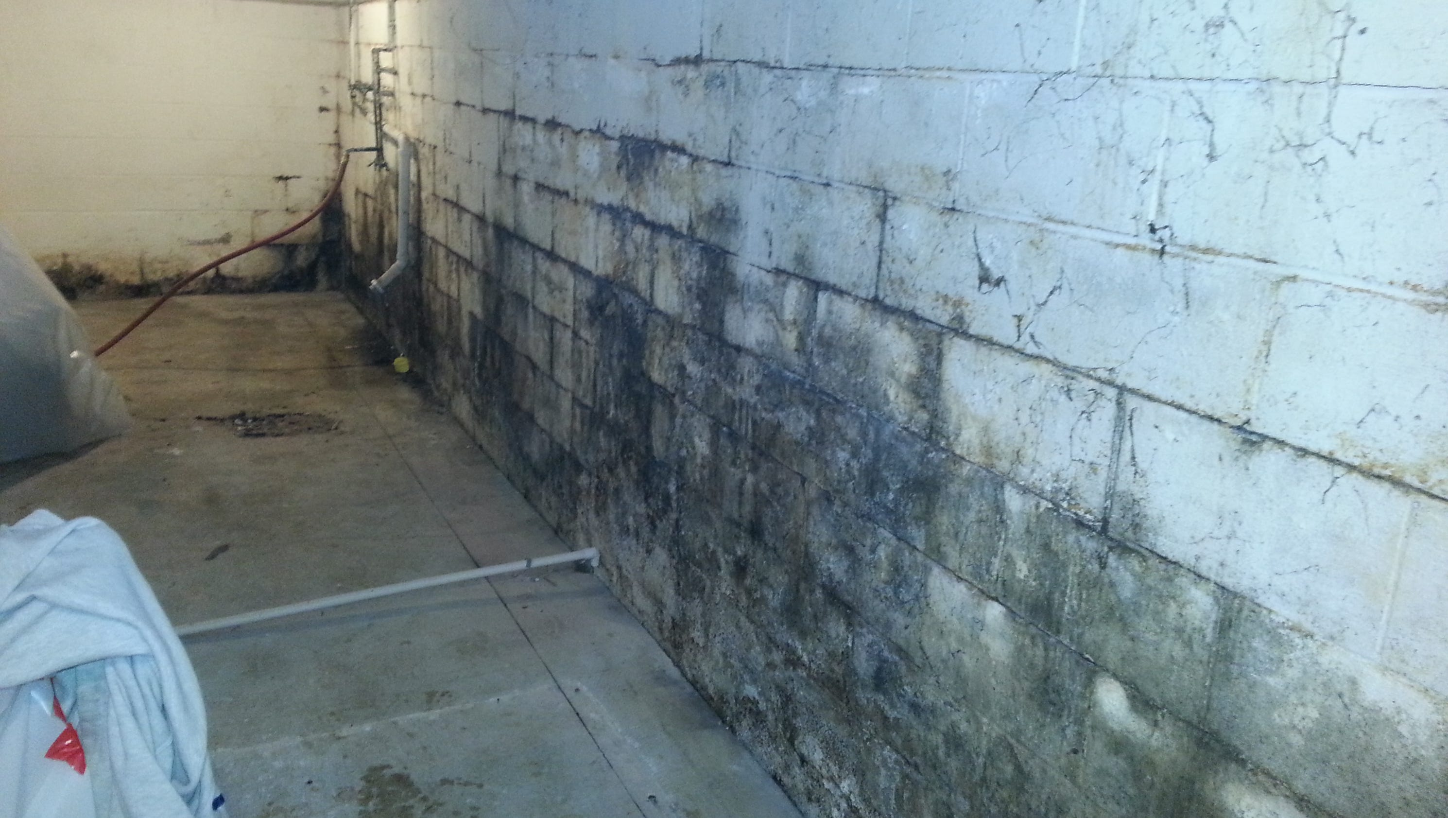 Stop Mold From Lurking In Your Basement