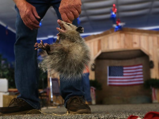 The annual Possum Festival is Saturday in nearby Wausau.