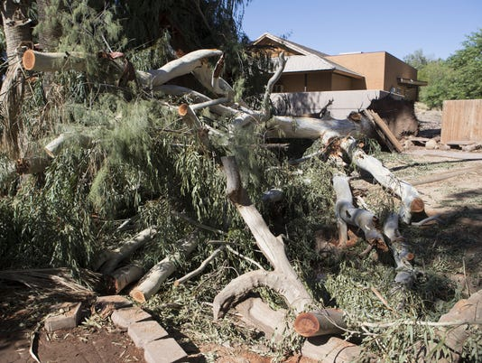 Phoenix Zoo storm damage