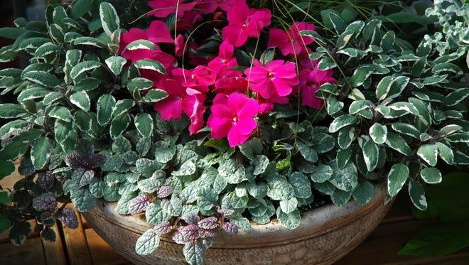 This elegant bowl features edible variegated sage, ajuga and impatiens.