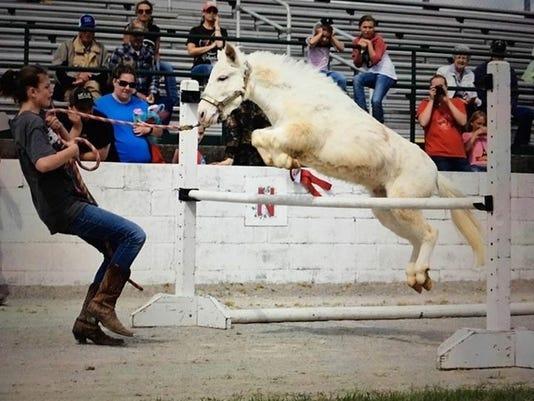 636269049283251785-horse.jpg