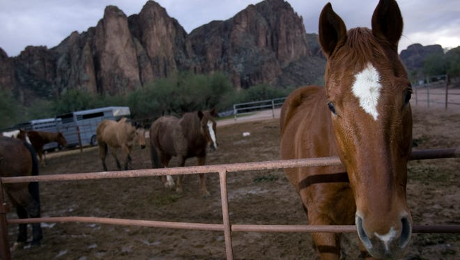 Horseback riding is available at the Saguaro Lake Ranch Resort off of Bush Highway in unincorporated Maricopa County.