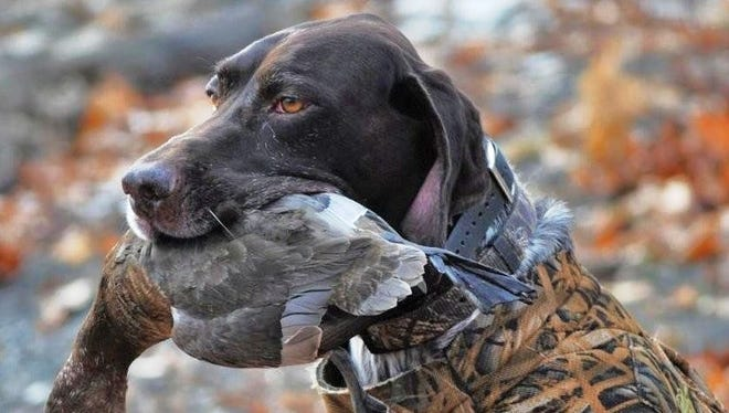 Josh, a German shorthaired pointer  who was owned by Judy and Andy Zeigler of Odessa, was inducted into the German Shorthaired Pointer Club of America Hall of Fame.