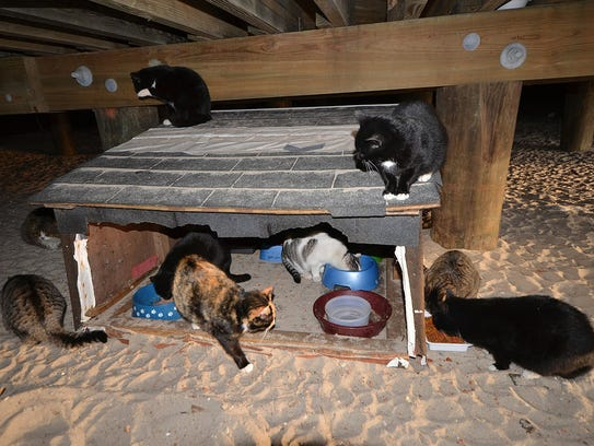 A photo of a feral cat colony in New Jersey, photographed