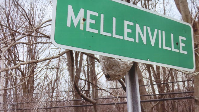 A white-faced hornets nest was built on the back of this sign, which faces west on the Route 217 in Columbia County.