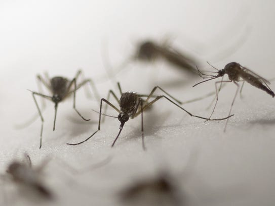 New Mexico Health Department is aggressively alerting the public to the dangers of mosquitoes carrying the Zika Virus and the West Nile Virus.