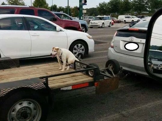 1407693215000-Dog-tied-on-trailer-blurred