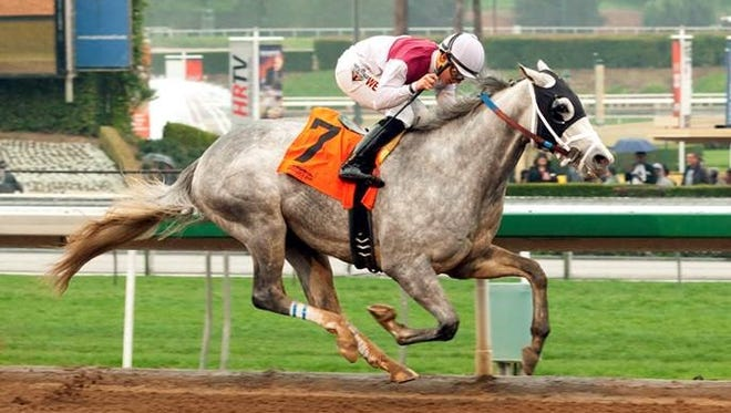 Calculator easily won Saturday's Sham Stakes to earn his first victory - and to drop to 25-1 in Wynn Las Vegas' Kentucky Derby future odds