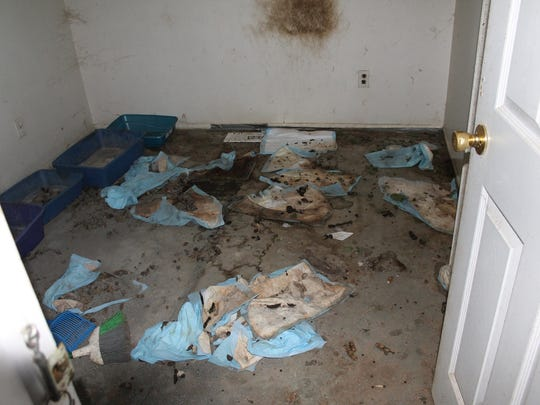 Urine pads and litter boxes were in the Waterford Township home on Ridge Top Drive.