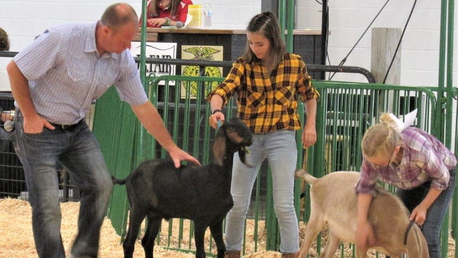 Becca Schuch (rear) serves as vice president of the Holmes County Junior Fair Board. She announced the goat show where judge Jeremy Bradford looks over the goats during his evaluation.