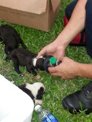 One of the puppies rescued from a hot truck in Fort Myers gets some oxygen from a firefighter.