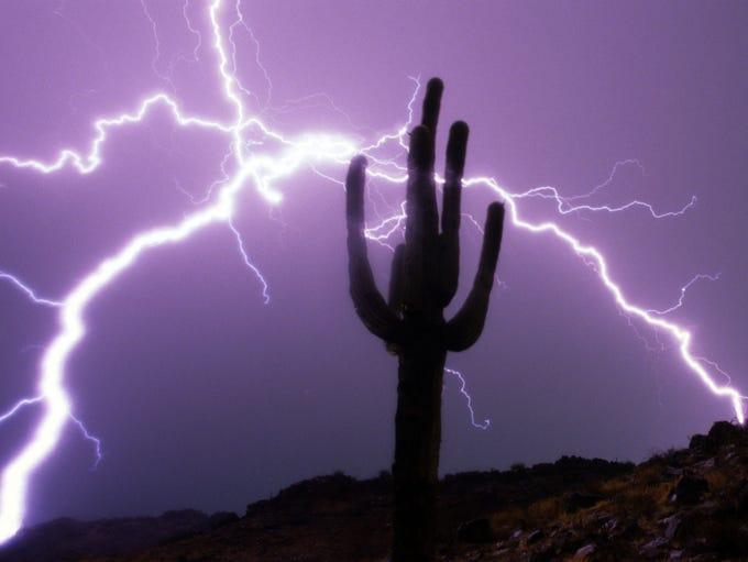 1. The saguaro cactus (Carnegiea gigantea) was named