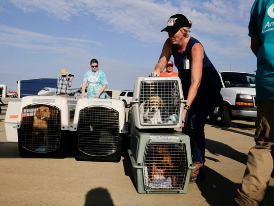 Melinda Fallout of Acadiana Animal Aid prepares to load dogs displaced after recent floods onto a plane as part of the Wings of Rescue project at Lafayette Regional Airport September 8, 2016. The animals would be delivered to no-kill shelters in Utah, Oregon and Washington.