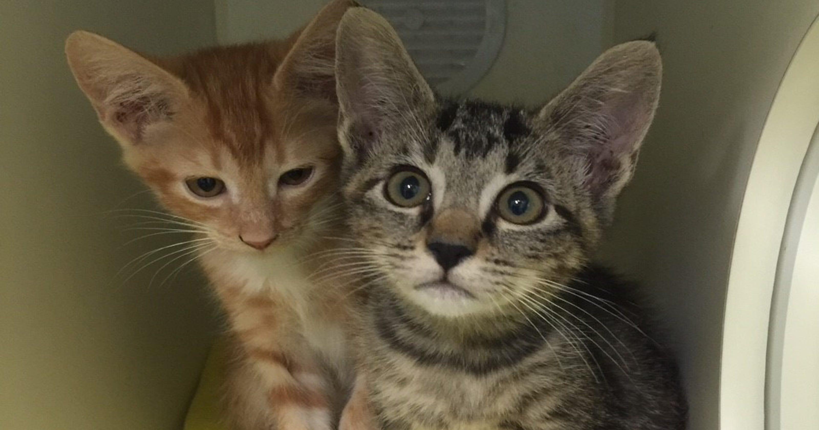 adopt a pet indianapolis