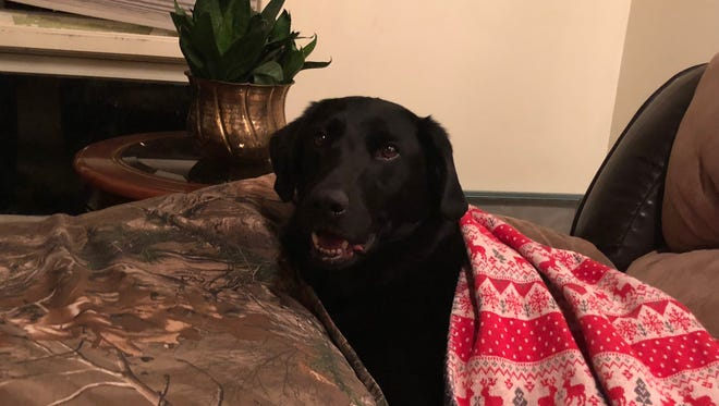 Cosby relaxes under some blankets, warm and happy after his five-day ordeal in the country south of Great Falls.