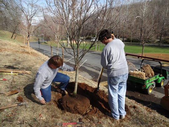 Matthew Sensabaugh and Terry Bonner plant a dogwood