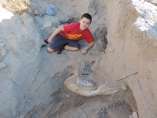 Jude Sparks poses with the jawbone of a stegamastodon, an ancient ancestor of the elephant, that he discovered while hiking in the desert in Las Cruces with his family. The Sparks family contacted NMSU biology professor Peter Houde, who enlisted students to help dig up the fossil in May.