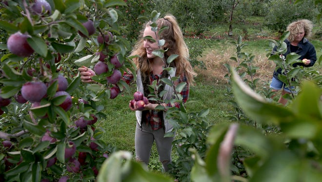 Katie Stankaitis and her mother Vicki Stankaitis pick apples at G and S Orchards in Walworth.