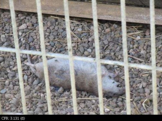 In September 2013, USDA officials photographed a  dead rodent inside an enclosure for coyotes at Cricket Hollow Zoo.