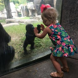 A sweet encounter between a young girl and a baby gorilla was caught on camera at the Fort Worth Zoo in Dallas.