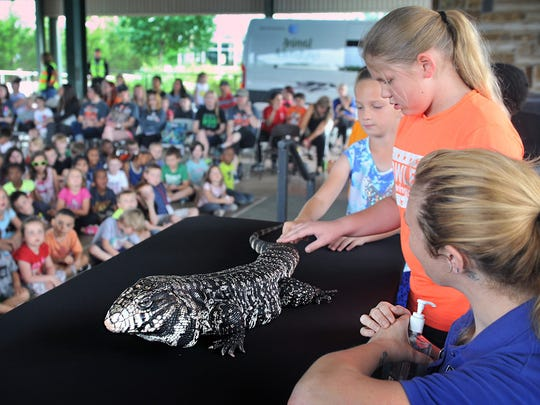 Volunteers get to pet a black and white Tegu lizard, one of eight animals from the Dallas Zoo Animal Adventure show at River Bend Nature Center. The show continues Wednesday and Thursday with shows at 10 a.m. and 11:15 a.m. For more information call RBNC at 940-767-0843.
